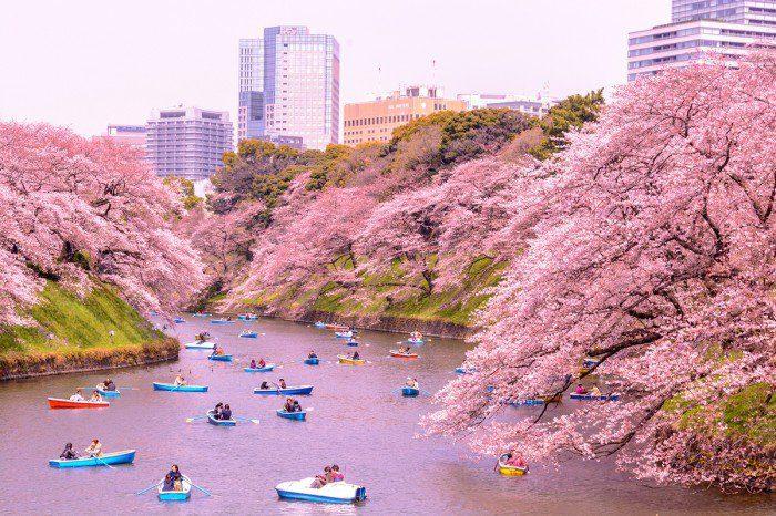 Những địa điểm ngắm hoa anh đào đẹp nhất tại Nhật