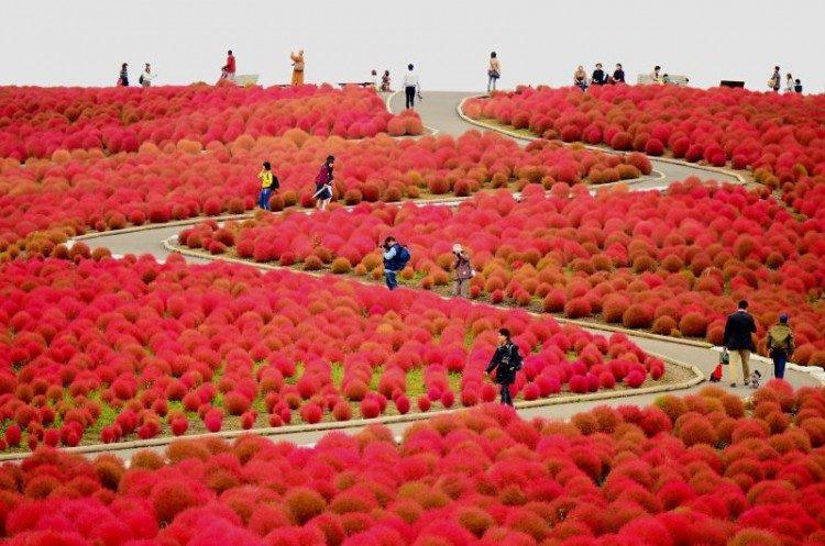 Hoạt động vào mùa thu Nhật Bản