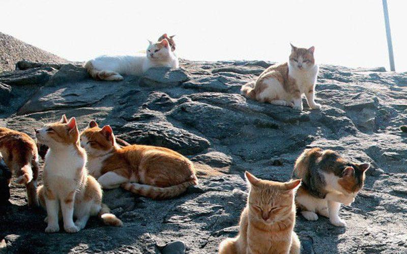 Thiên đường của Mèo ở Nhật Bản