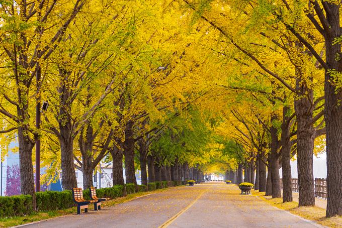 mùa thu hàn